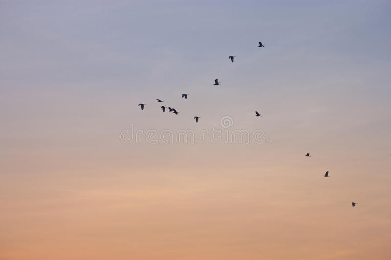 The birds fly the skies, beautiful royalty free stock images