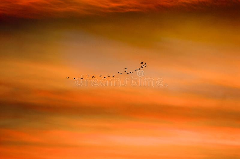 Birds fly together on the sea at sunset with beautiful orange stock images