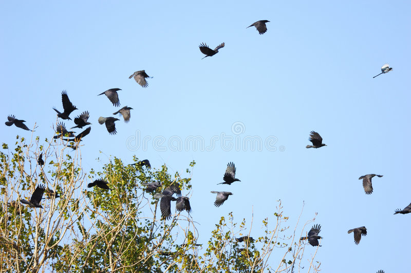 Birds flying stock images