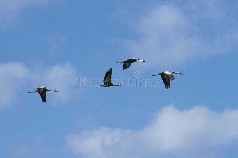 Download Birds and Flying stock photo. Image of outdoor, animal - 944080