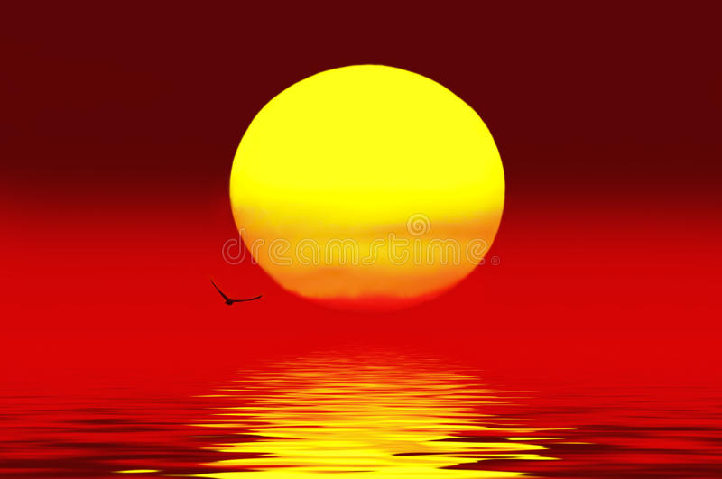 Birds flying above the sunset.on lake stock photography