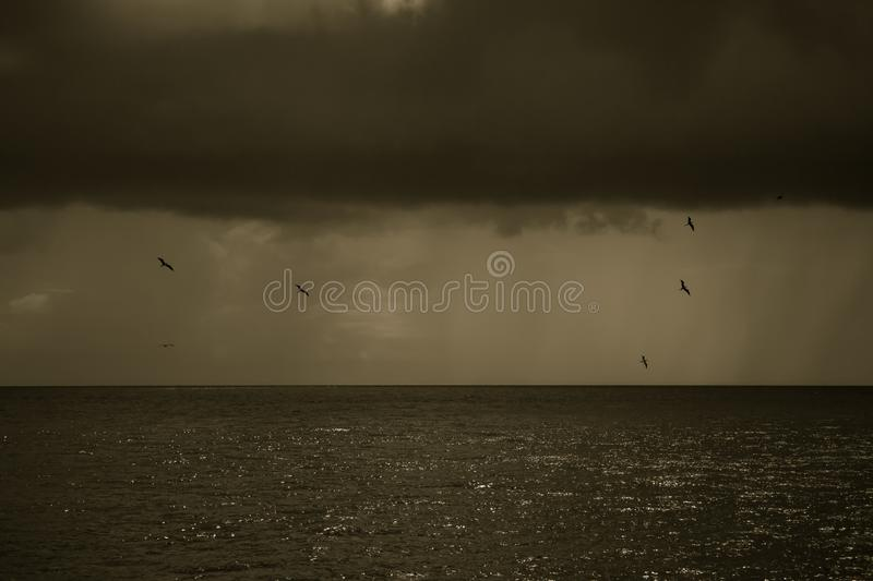 The birds are flying around and around in the cloudy sky stock photos