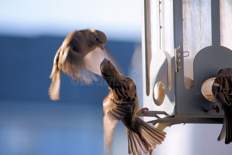 Birds flying around a bird feeder stock images