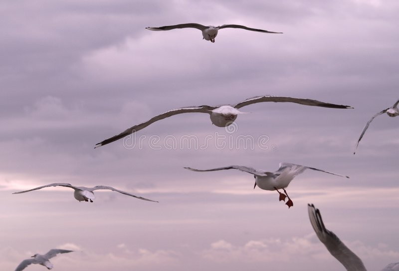 Flying Birds Free Stock Photos Download 3 416 Free Stock: Birds Flying Away Stock Photo. Image Of Bird, Flight