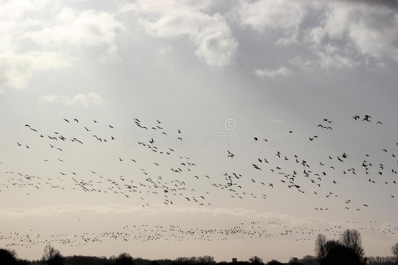 Birds flying in a circle royalty free stock photos
