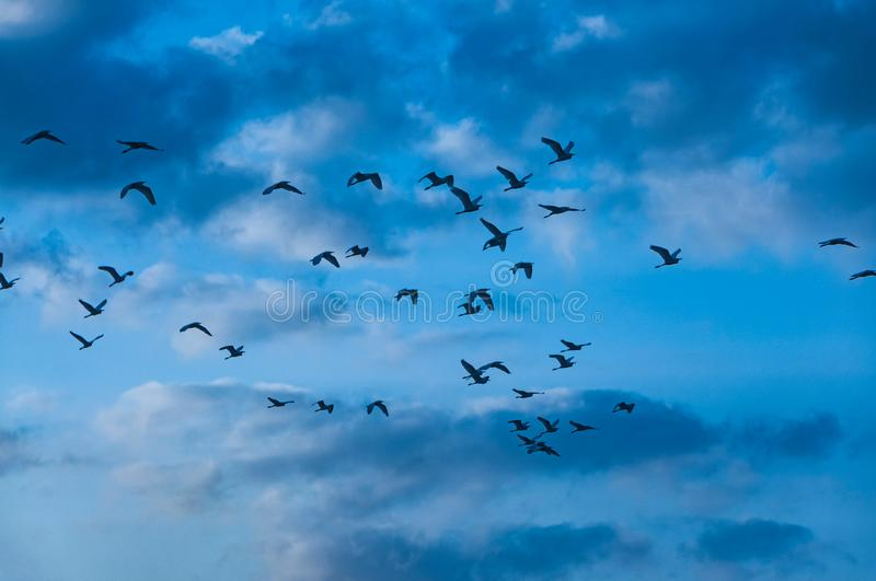 Birds flying. Flock of birds flying on blue sky background royalty free stock photos