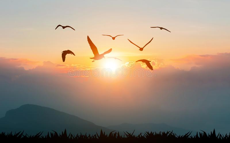 Birds flying freedom on the mountains and sunlight. Silhouette stock image