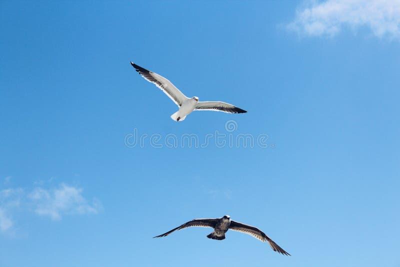 Birds Flying High. stock image