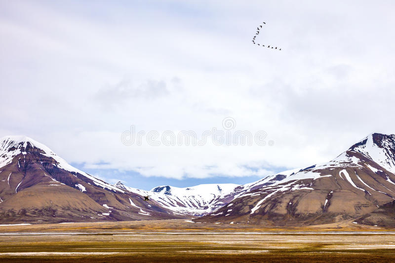 Birds flying between mountains in arctic summer landscape. Birds flying in V formation between mountains in arctic summer landscape . Clouds over mountains royalty free stock photography