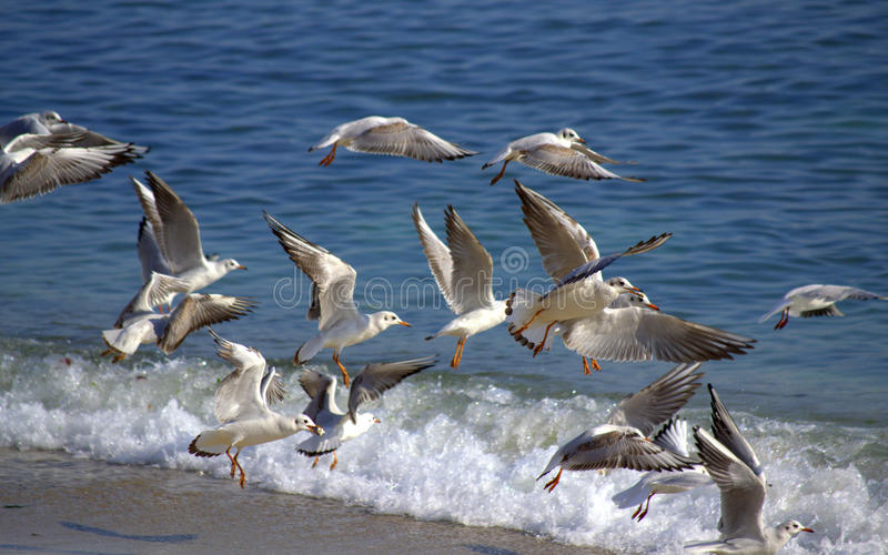 Birds flying out beach royalty free stock images