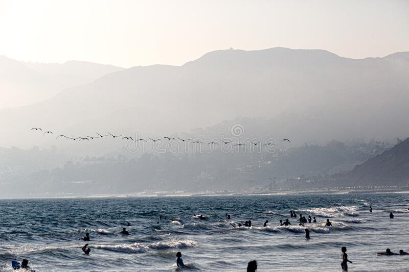 Birds flying over beach royalty free stock photography