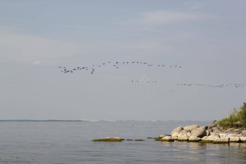 Birds Flying Over The High Seas / Ocean stock images