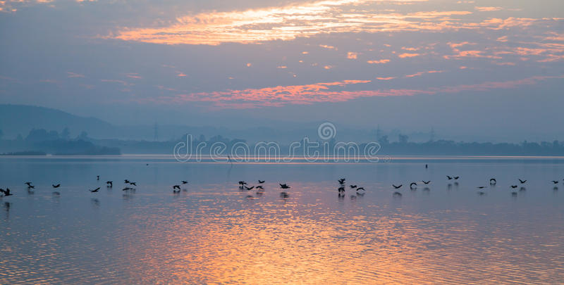 Birds flying over the lake stock images
