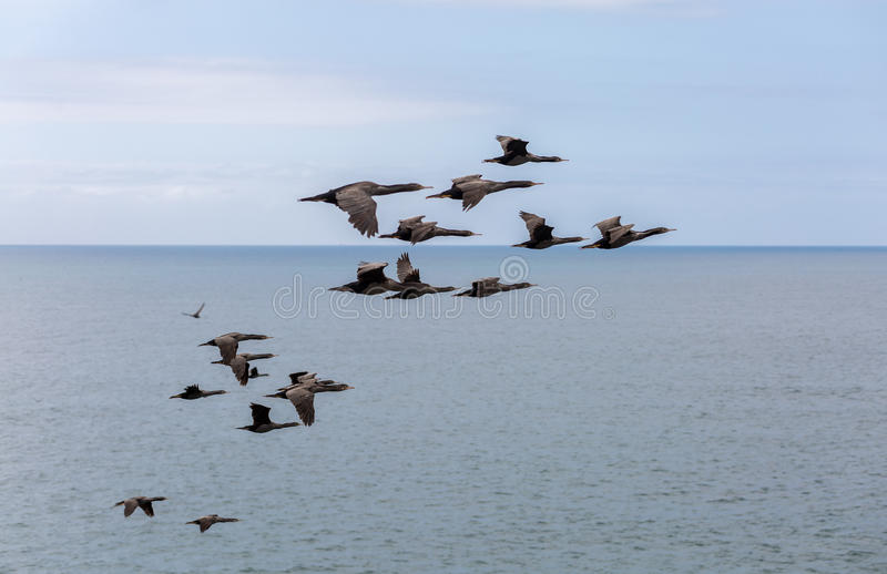 Birds flying over the ocean stock photo