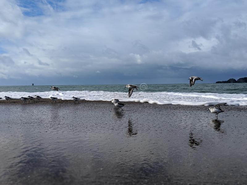 Birds flying over reflective beach with pacific ocean and blue sky in the background. Birds flying over reflection over beach stock photography