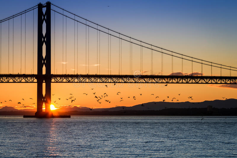 Birds flying over river at sunset stock photo