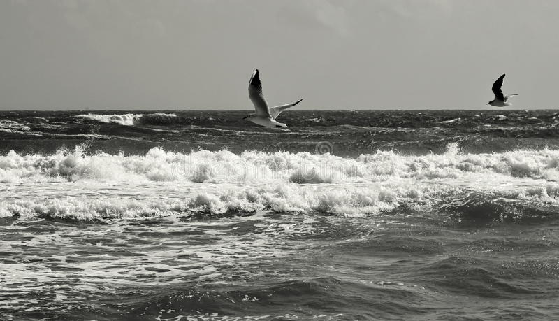 Seascape. Birds flying. Summer, sea, waves, holiday, fun - Black Sea, landmark attraction in Romania. Seascape. Birds flying over the sea. Summer, sea, waves royalty free stock photos