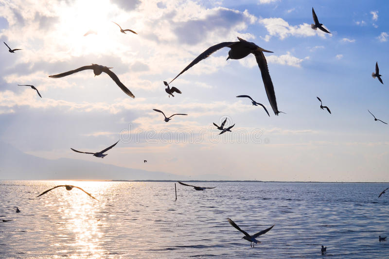 Download Birds Flying On The Sea At Sunset, Silhouette. Sun Between Clouds And Seagulls Flying. Stock Photo - Image: 83700824