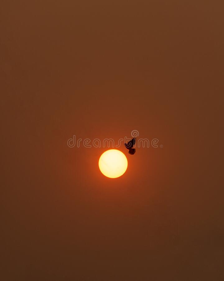 Birds flying with the sun.  stock photos