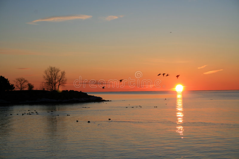 Birds Flying At Sunrise Royalty Free Stock Photo