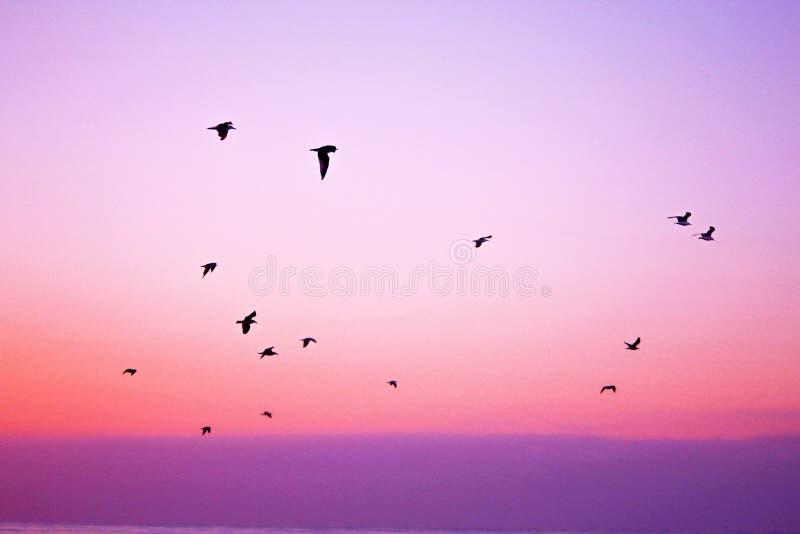 Birds flying at sunset royalty free stock photo
