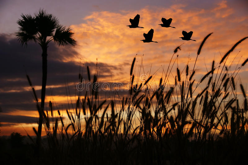 Birds flying at sunset. Orange sunset and cloudscape in countryside with silhouetted birds flying in sky royalty free stock photo