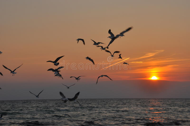 Birds Flying into the sunset royalty free stock image