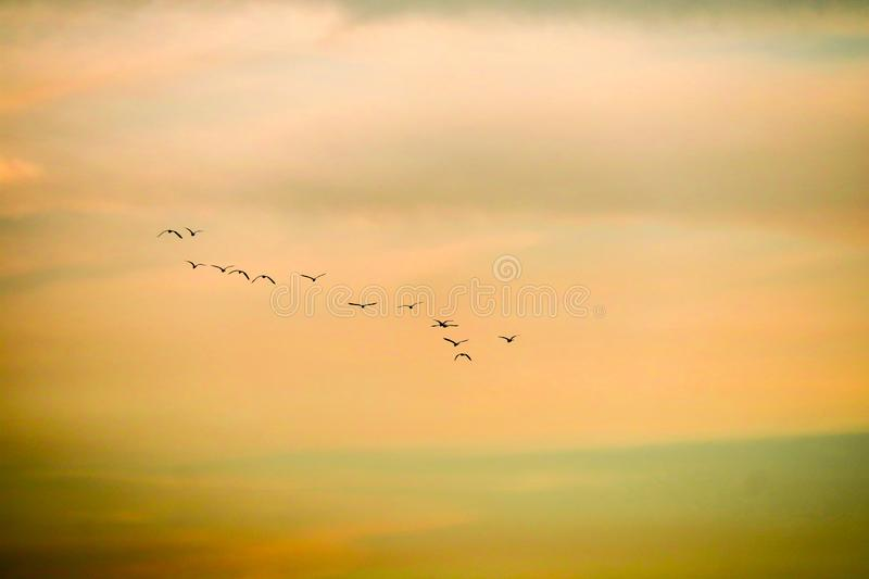 birds flying to home on sunset sky soft cloud stock photo