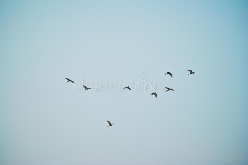 The birds are flying. Want to go home stock photo