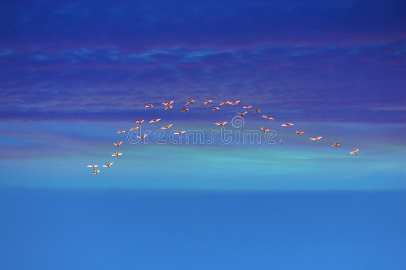 Birds In Formation Flight. Scientists have determined that the V-shaped formation that geese use when migrating serves two important purposes: First, it royalty free stock image