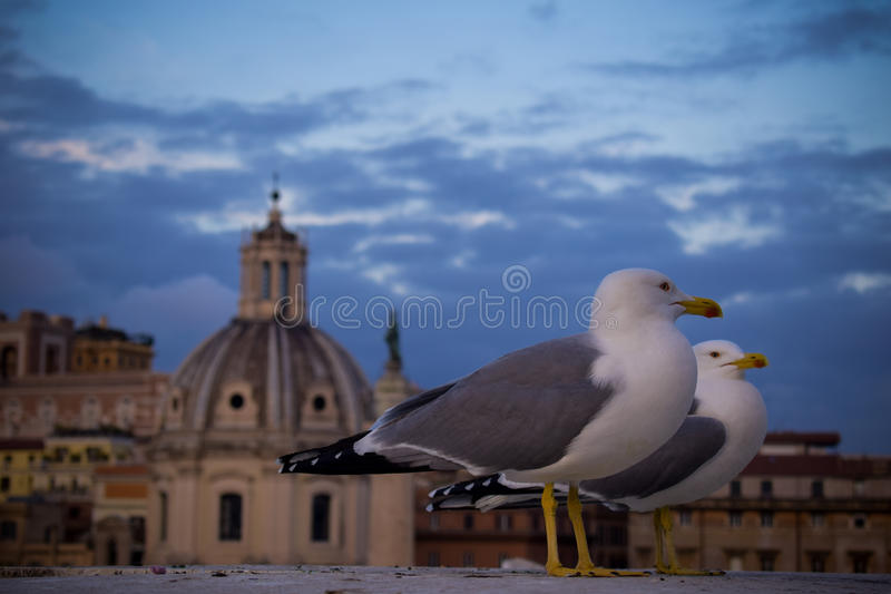 Birds in front of the church and blue sky with clouds in background. Birds, seagulls in front of the church and blue sky with clouds in background stock image