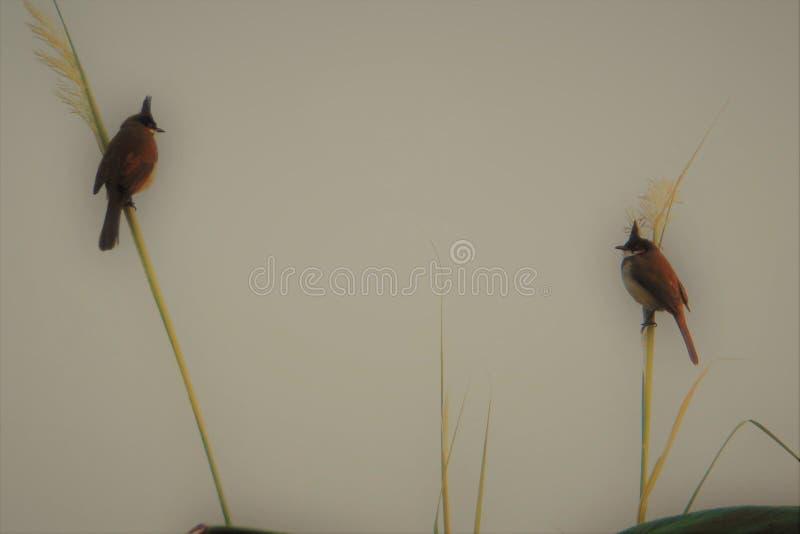 Birds gallery stock images