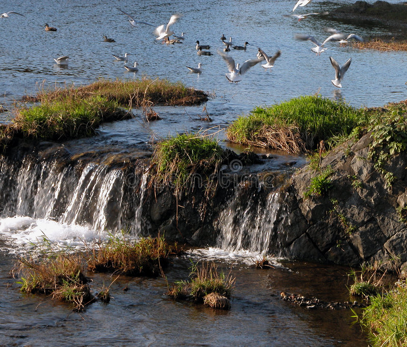 Download Birds game stock photo. Image of waterfall, landscape, place - 41000