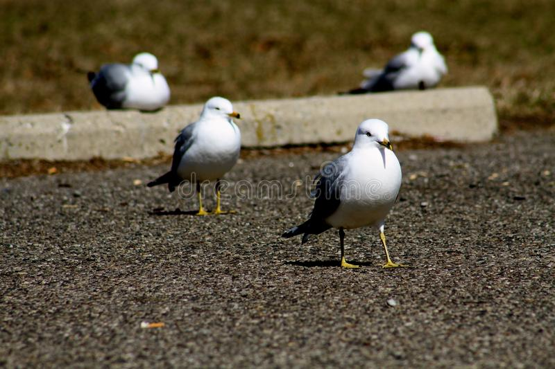 BIRDS GROUPED TOGETEHER royalty free stock photo