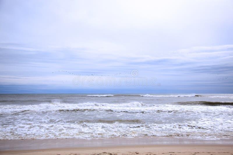 Download Birds on the horizon stock photo. Image of ocean, beach - 12598166