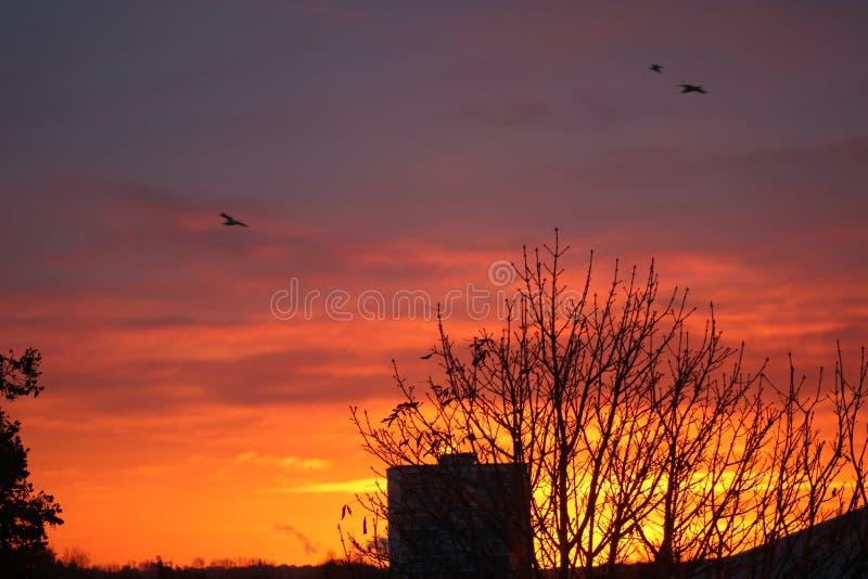 Birds on the horizon. Burning, hot, sky, flying, black, orange, red, trees, chimney, roof, clouds, evening, night, goodnight, nimal, animals, nature royalty free stock images