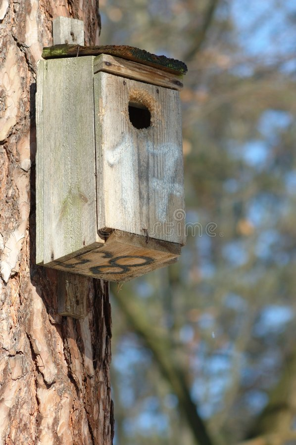 Birds House. In a forest royalty free stock images
