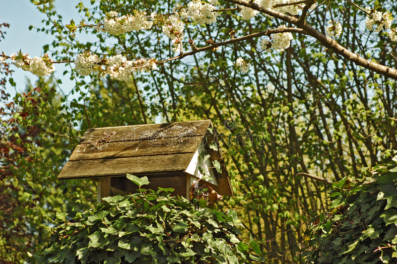 Birds house and feeder stock image