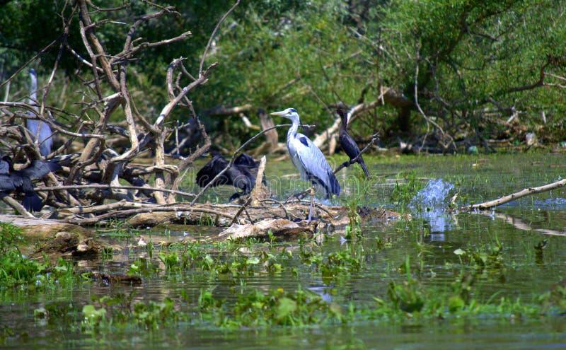 Birds in lake royalty free stock photos