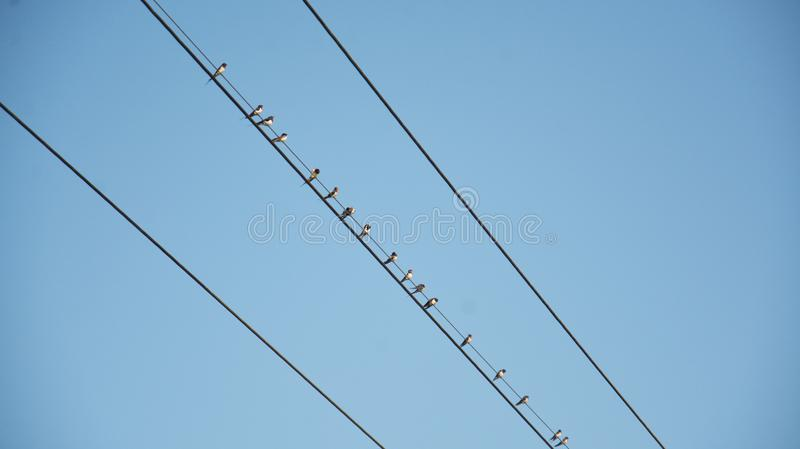 Birds lined up on the top of power cable stock photos