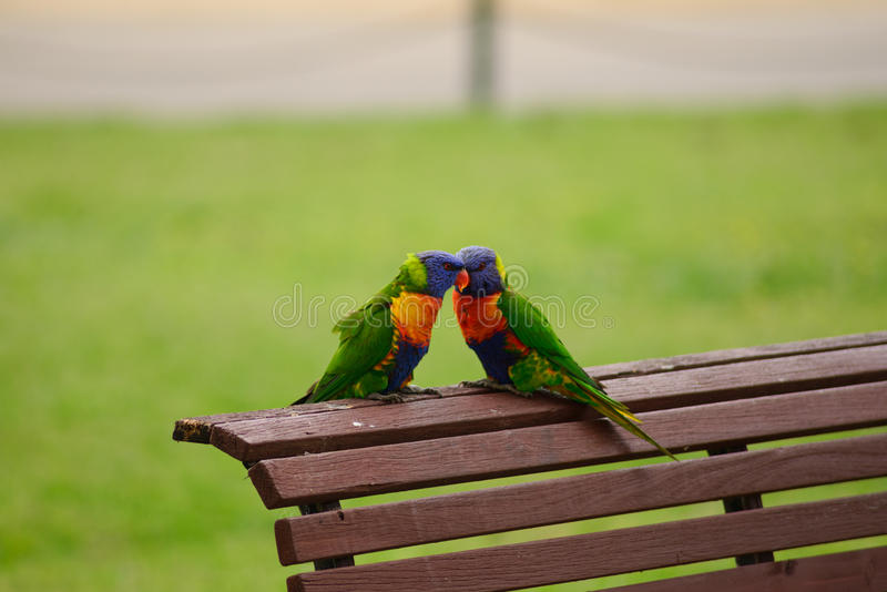 Birds in love. A couple of birds in love royalty free stock images
