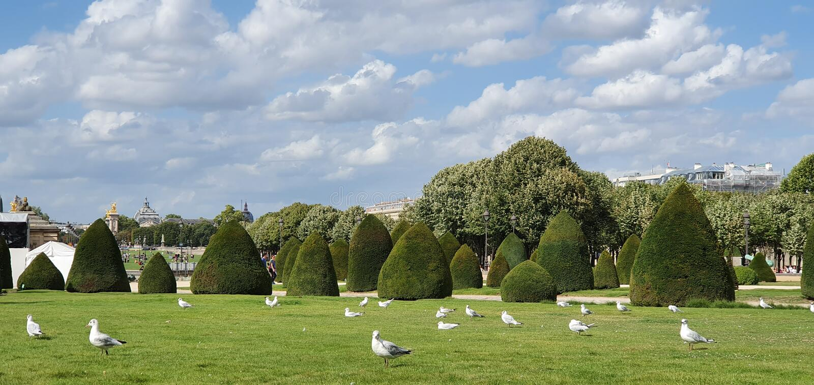 Birds love to  relaxing in the beautiful garden in summer time royalty free stock image