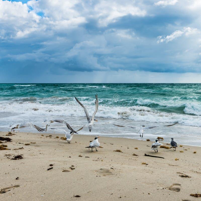 Free Birds. Miami Beach. Florida. Royalty Free Stock Images - 109492139