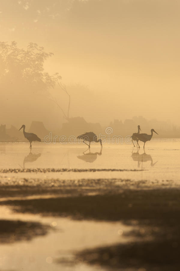 Birds in the mistic light royalty free stock photography