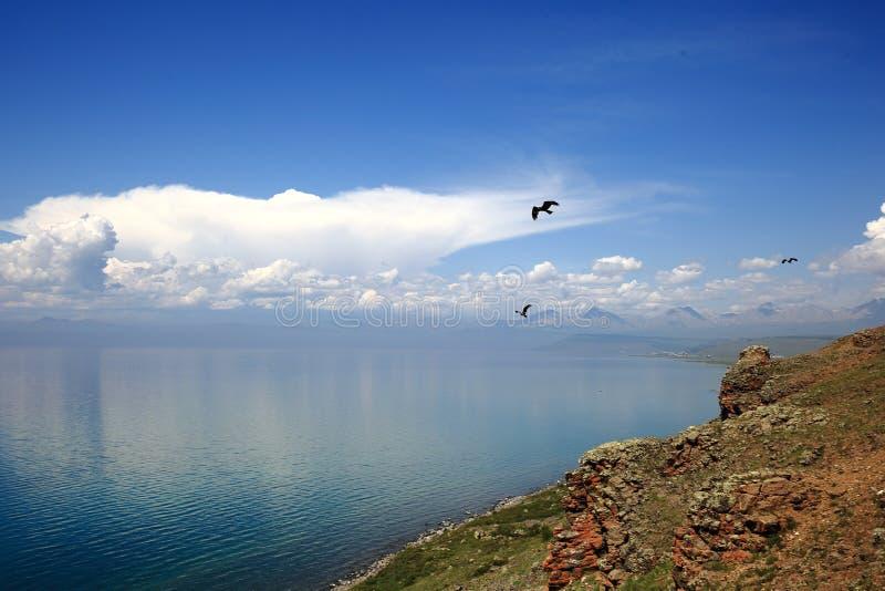 Birds of Mongolian lake Hovsgol stock photo