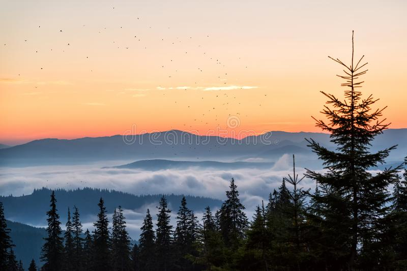 Birds in the morning sky in the mountains. Fantastic morning high in the mountains with birds flying above clouds, selective focus stock photo