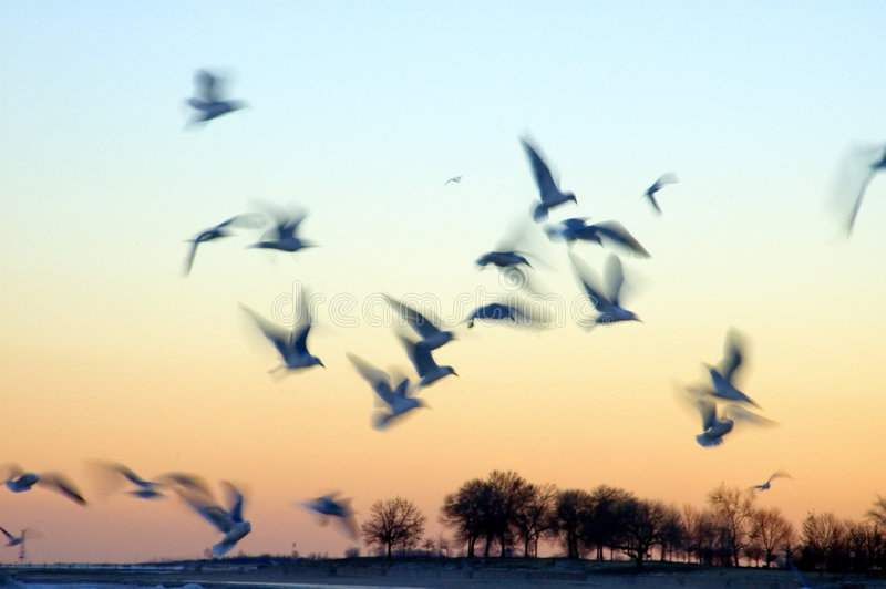 Birds in Motion at Sunset stock images