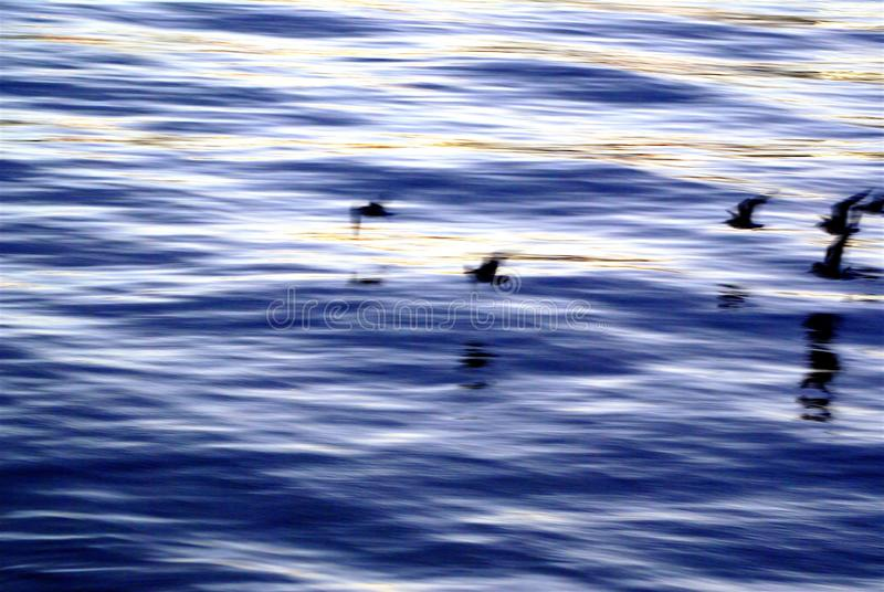 Download Birds In Motion On Thames Rive Stock Image - Image: 2374879