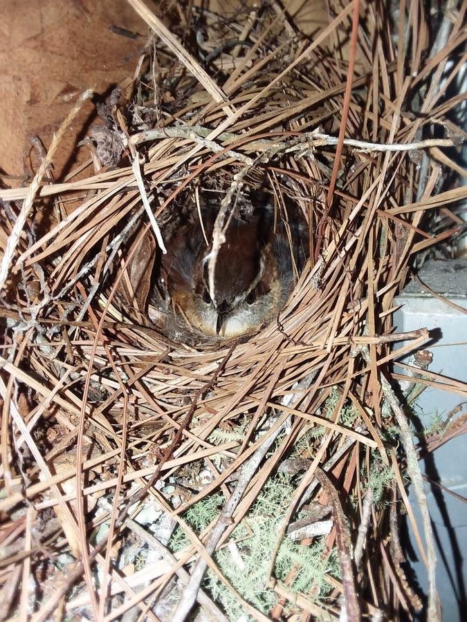 Birds Nest stock photography
