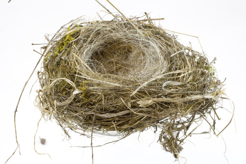 Birds Nest on white background royalty free stock photos